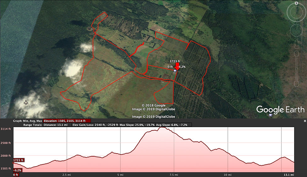 Half Marathon Elevation Distance Profile