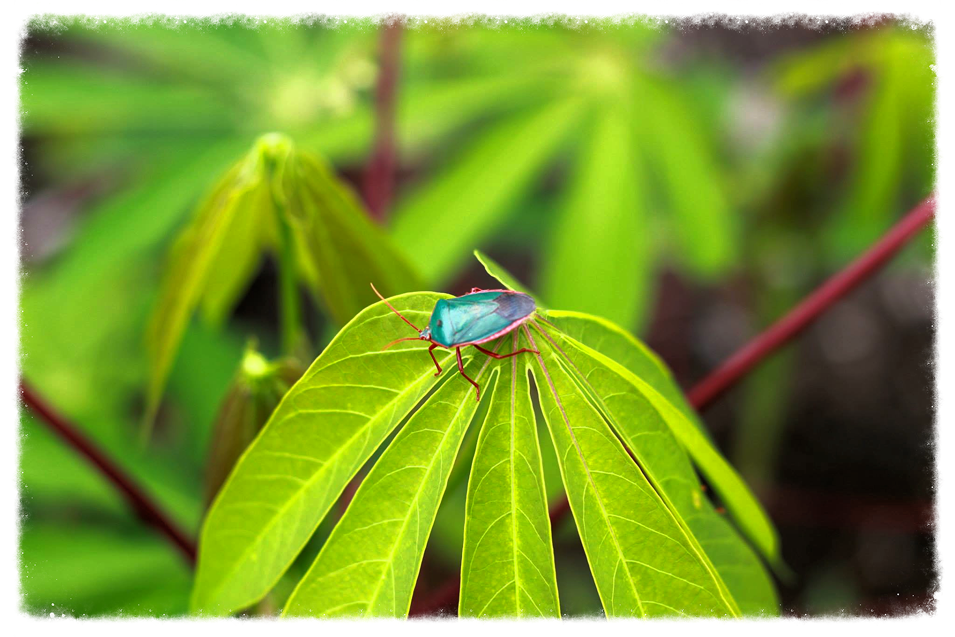 bug on a leaf_edited.jpg