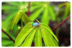 bug on a leaf_edited.jpg