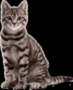 cat-png-17.png
