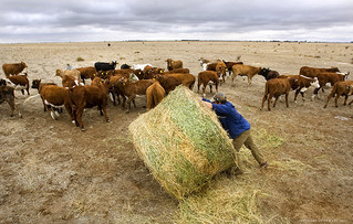Labor refuses drought relief for local farmers
