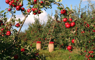 Liberal Nationals slam union war against agriculture seasonal workforce