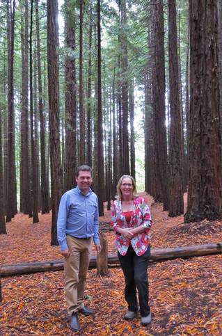 Redwood Forest set for upgrade
