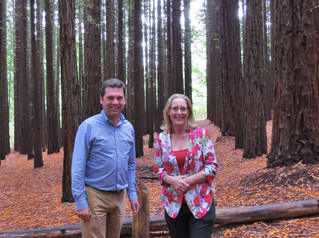 Calls to upgrade Redwood Forest