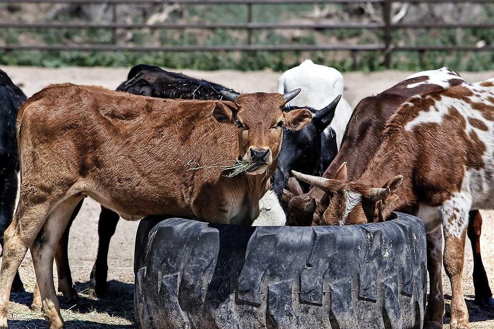 animal-feed (1).jpg