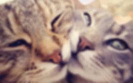 catlove.jpg
