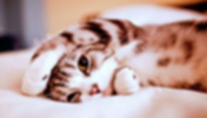 spoiled-cat-500x286.jpg