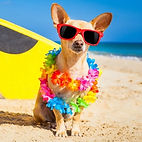 do-dogs-need-vacation-5_edited.jpg