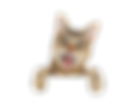 shutterstock_183908816_clipped_rev_1.png