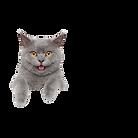 catttt_clipped_rev_1.png
