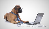 dog registration.png