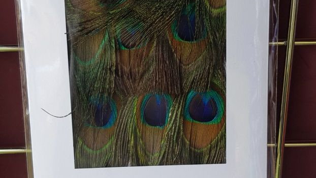 Peacock Eye Greetings Card