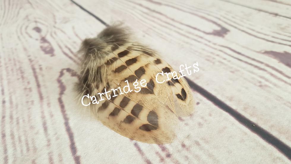 Henbird Underwing Feather
