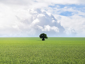 Colordex e Meio Ambiente