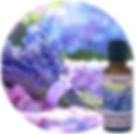 Lavender30mlsquare640w-jpg.jpg