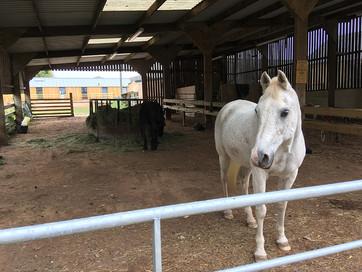 Farrantshayes Farm Horses