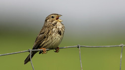 New paper about farmland birds