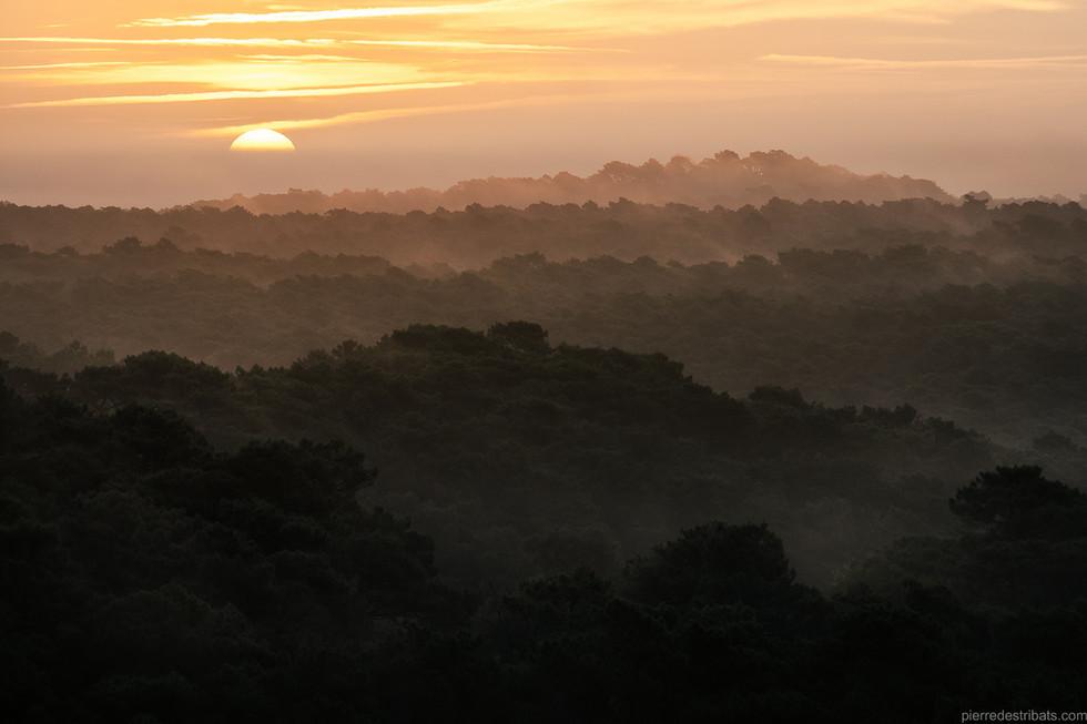 Lever de soleil sur la forêt usagère
