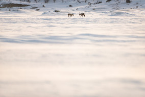 Meeting on a frozen lake
