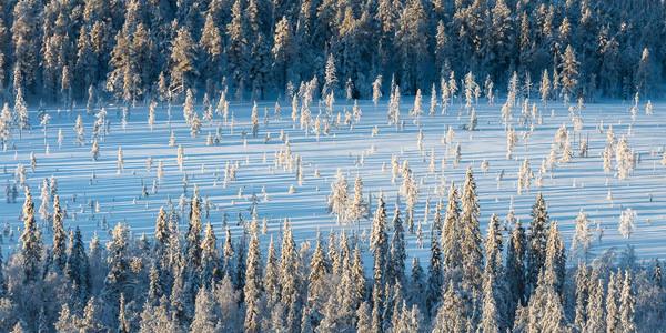 Tourbière dans la taiga enneigée en Laponie