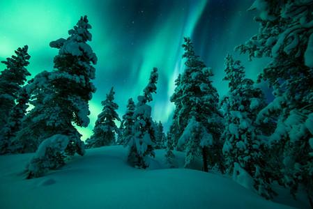 Aurores boréales au dessus des sapins pendant le voyage photo Laponie