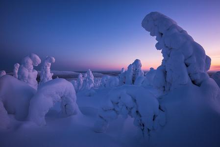Paysages enneigés en Laponie lors d'un voyage photo