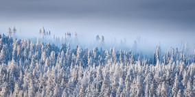 The last mist