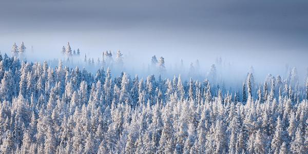 Sapins enneigés et brume au lever du soleil en Finlande