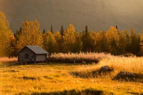 The wild hut