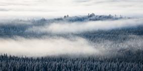 The last mist II