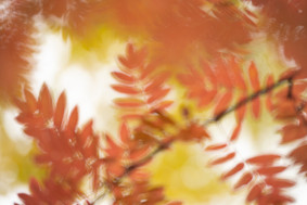 Autumn abstract II