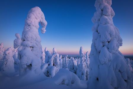 Forêt de sapins sous la neige pendant un voyage photo Laponie