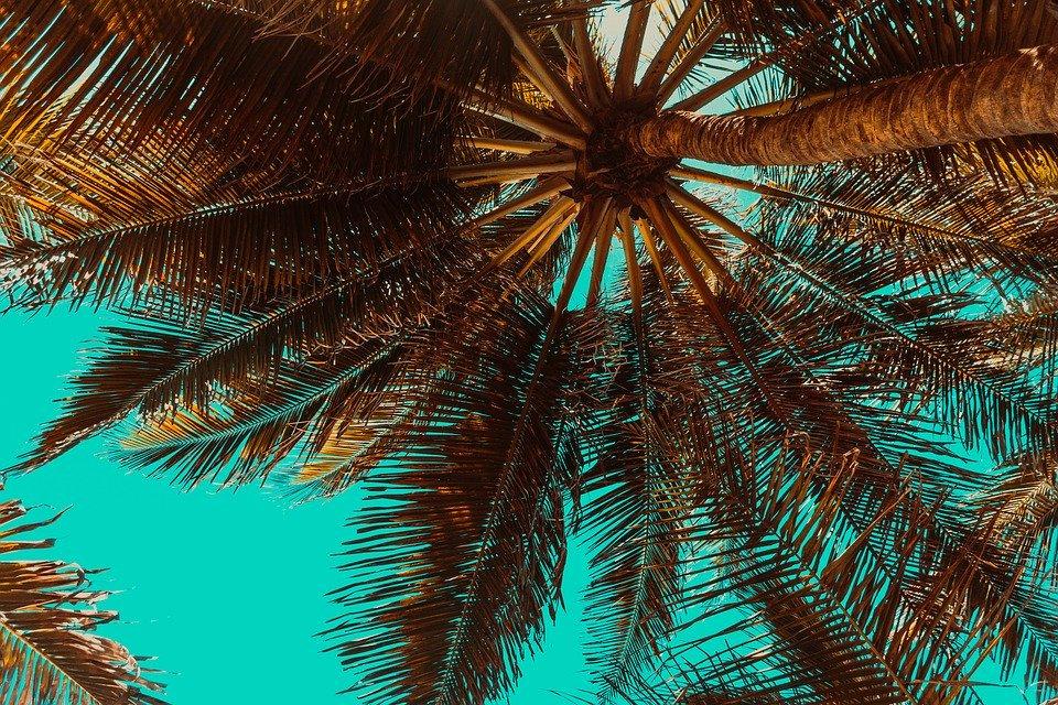 trees-3619180_960_720.jpg