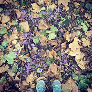 #autumn #walking #gunnersburypark #octob