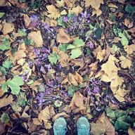 #autumn #walking #gunnersburypark #octob