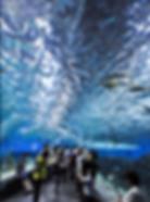 スクリーンショット 2019-06-05 11.14.07.png