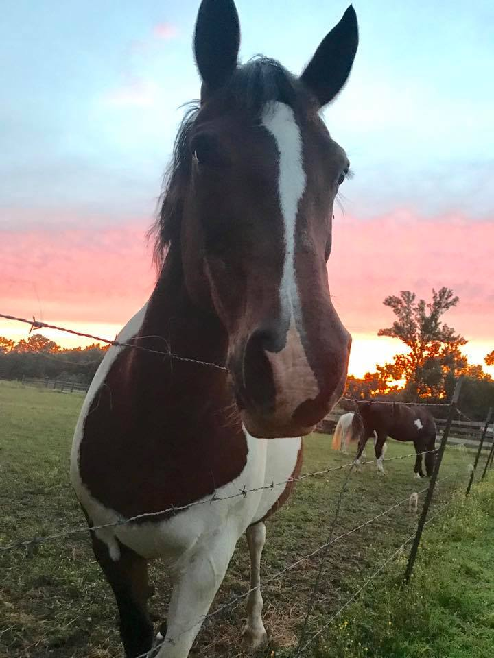 Horse SWR (1)