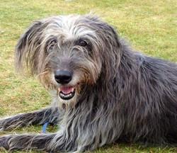 Dog walking Wiltshire