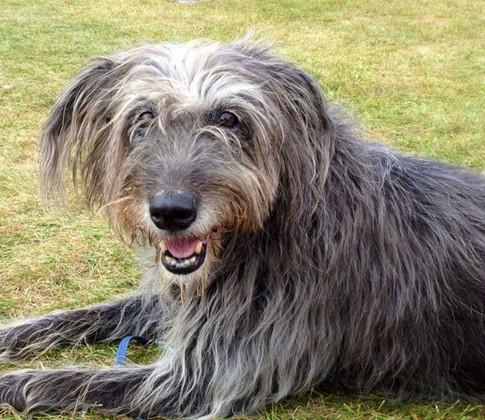 Dog walker wiltshire