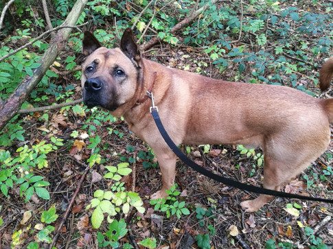 dog walker brinkworth