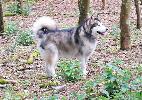 Dog walking Swindon, Wiltshire