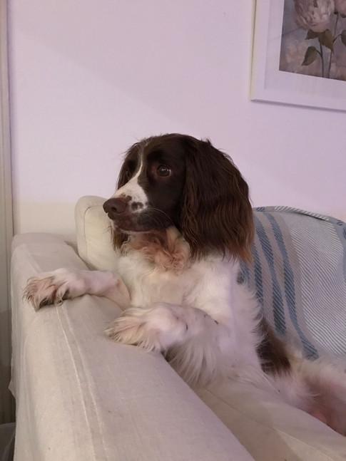 Pet sitting swindon wiltshire