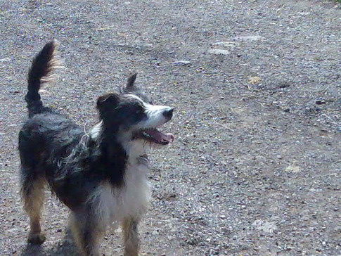 dog walker swindon, wootton bassett