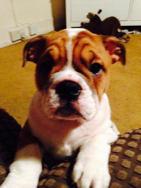 Dog trainer pet care swindon