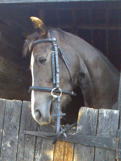 Freelance groom swindon