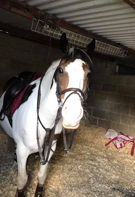 freelance groom stable duties swindon chiseldon wiltshire