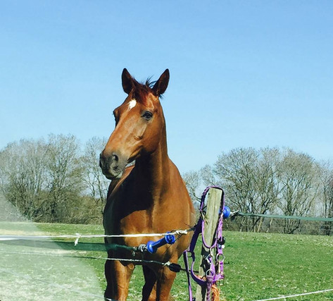 freelance groom horse care swindon wiltshire