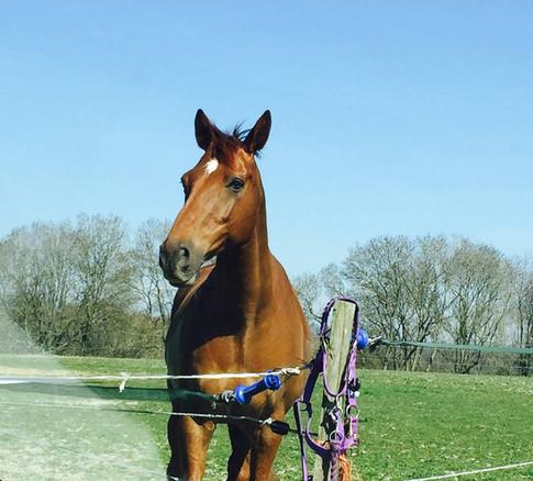 freelance groom horse care swindon wiltshire