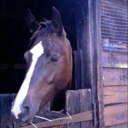Horse help Wiltshire