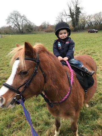 horse help swindon